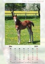 Baitz-Kalender-2021_05